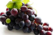 vitivinicola_prod